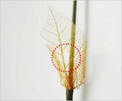 나뭇잎의 구멍